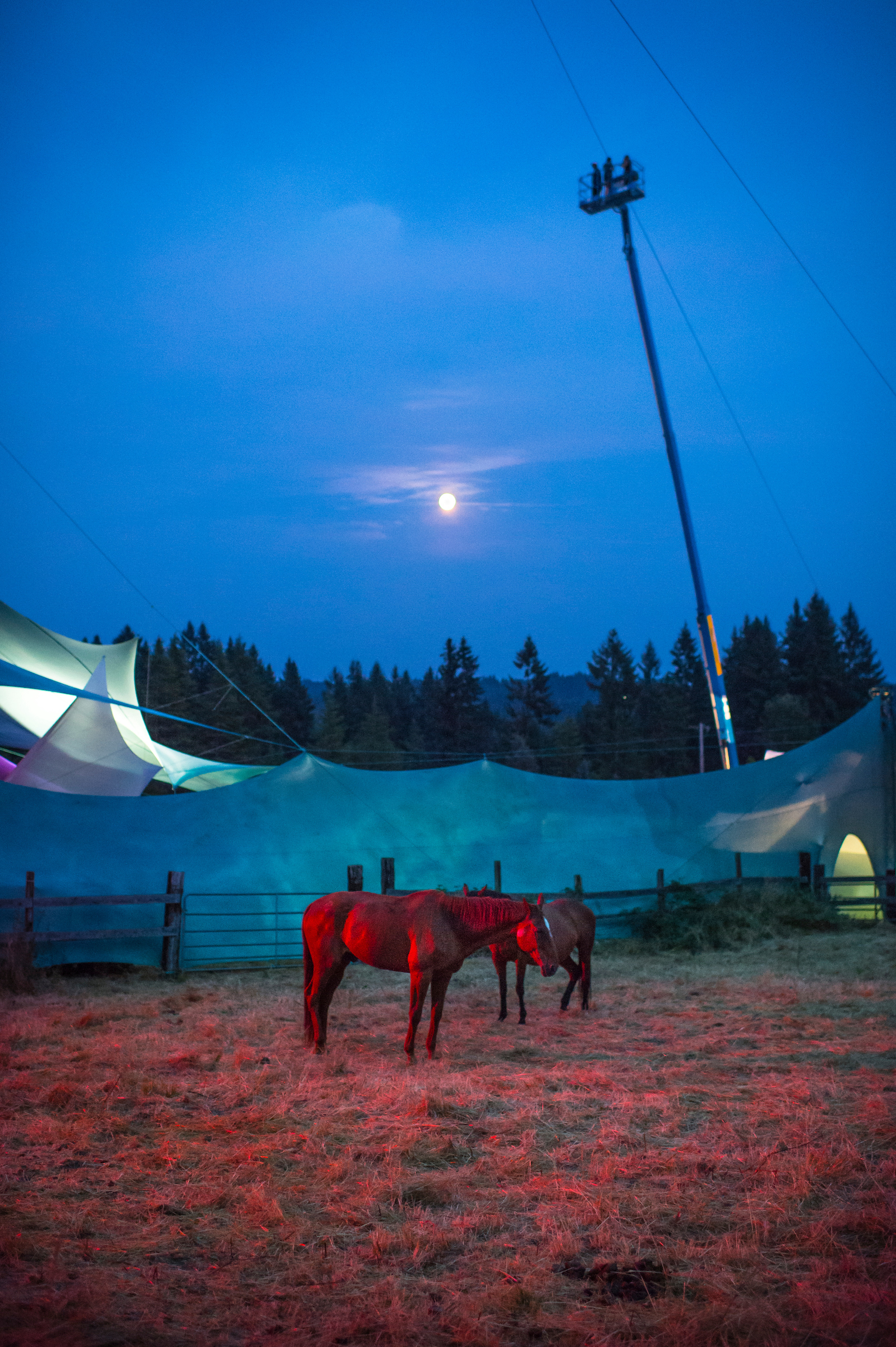 You can't have Pickathon without the horses (photo by Bill)