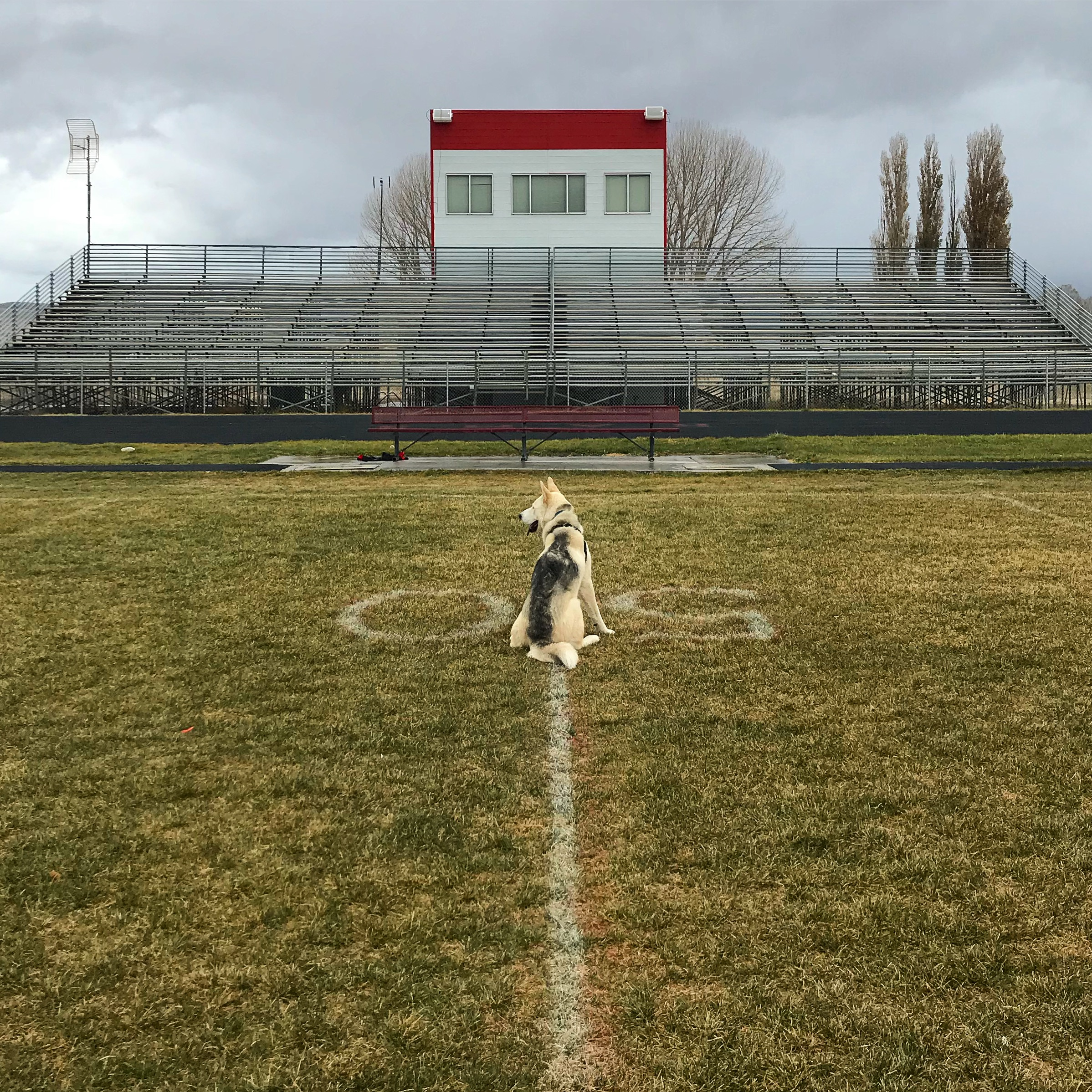 Thank you Monroe High School for your fenced field so poor Luka could finally get some running out of his system (alternate title: Friday Night Lights)