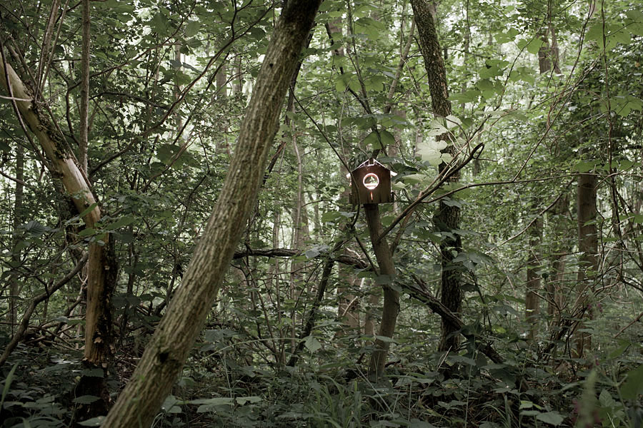 Coeurs de nature 03.JPG