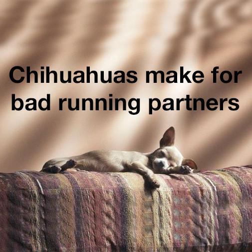 Chihuahua_running_Square_1200x628.jpg