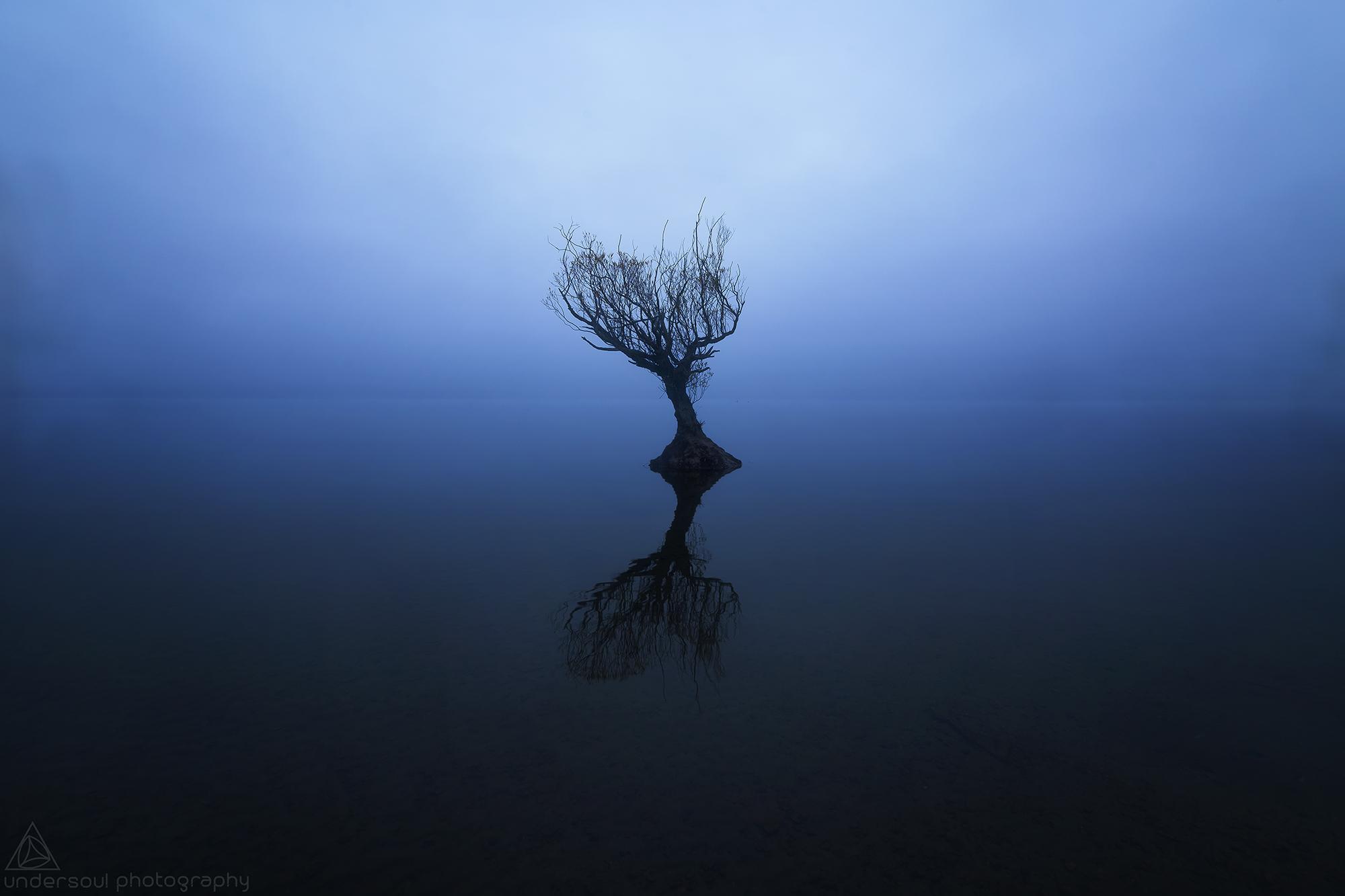 Lone Tree Web.jpg