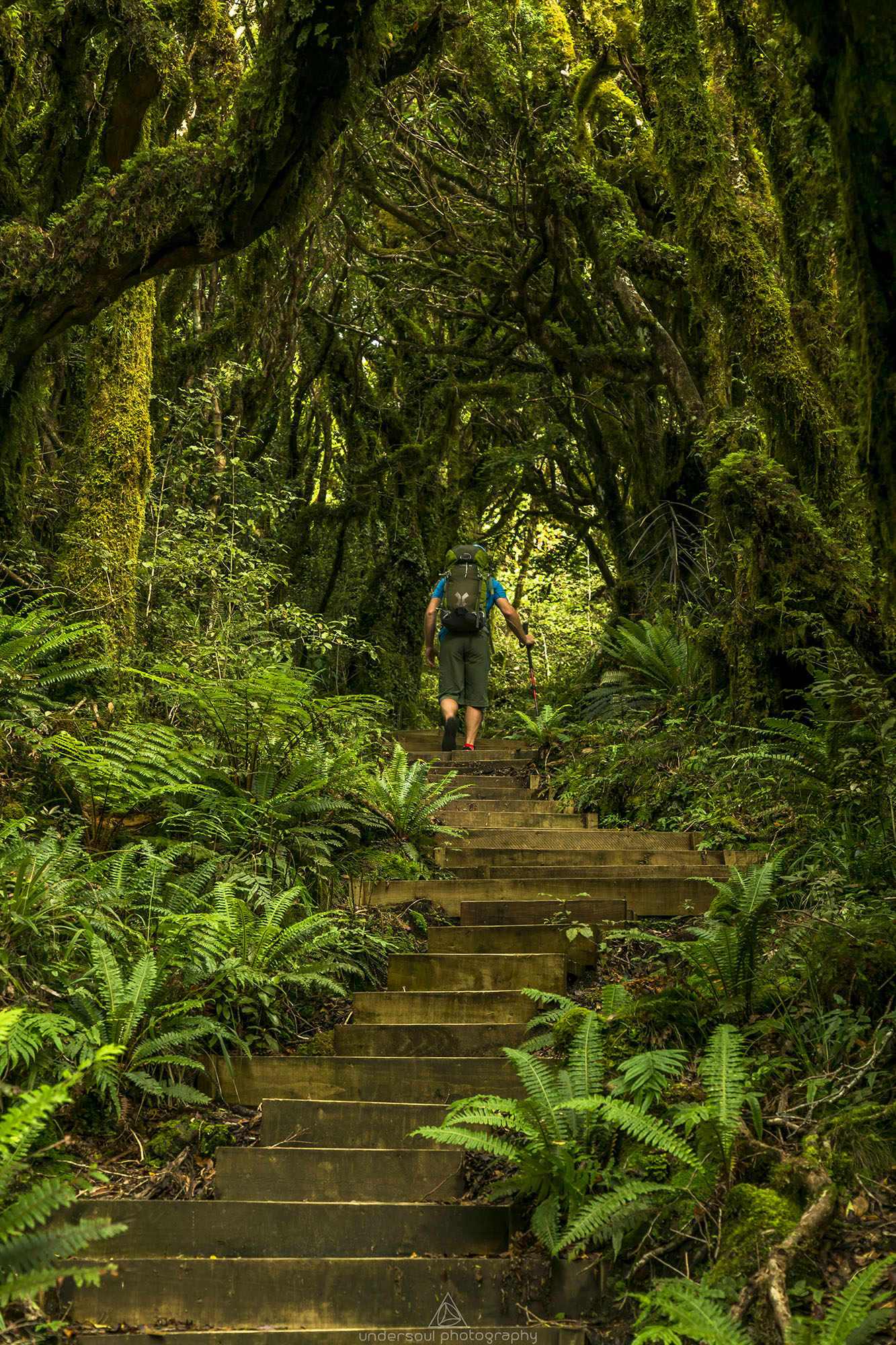 taranaki_forest_undersoul