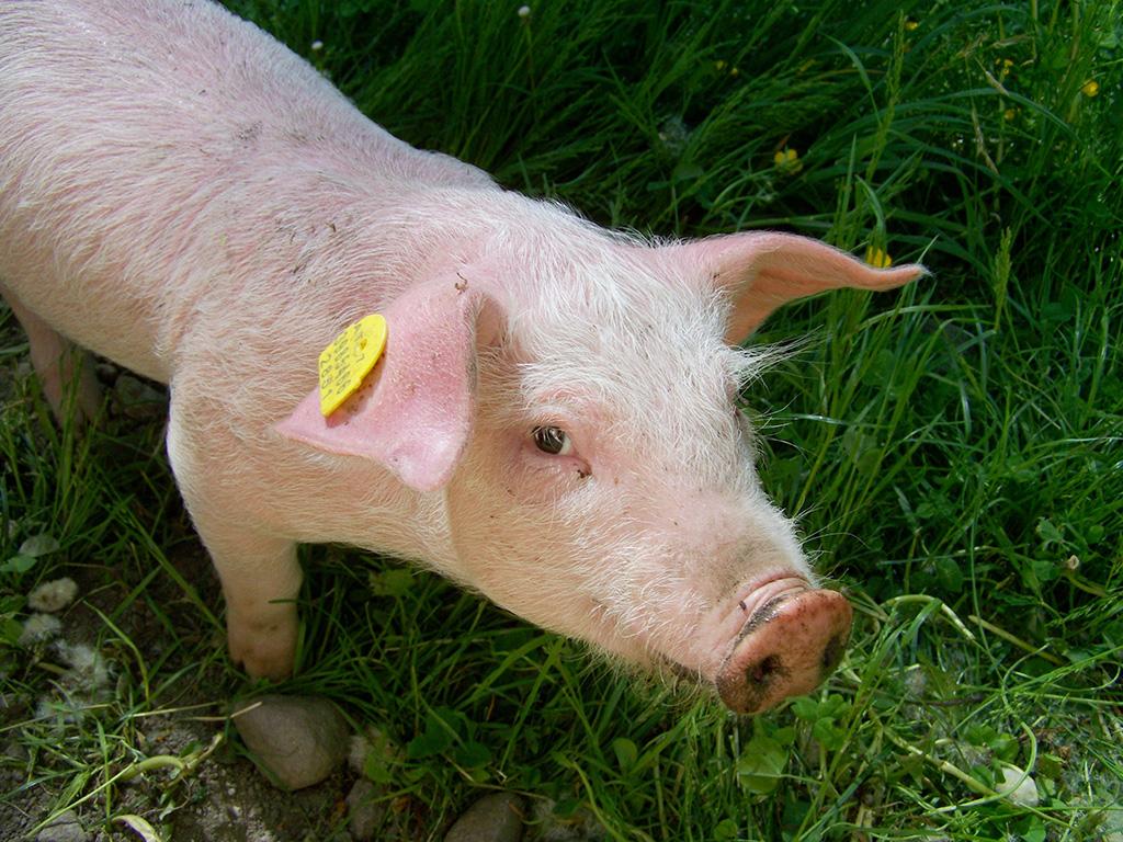 piggy-1514324.jpg