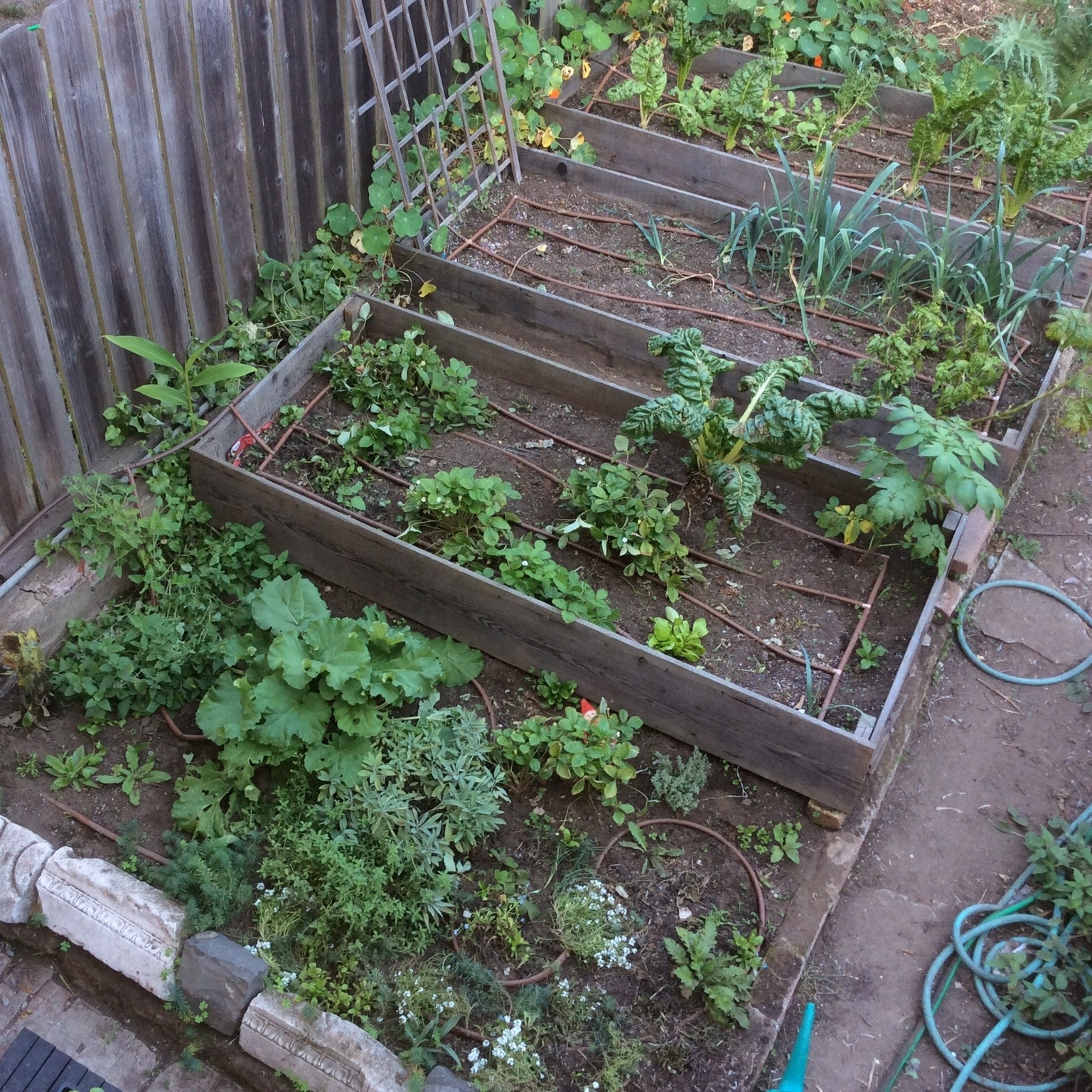 October 2015 - Between cutworms, Alcatraz, neglect, and poor planning, this month's garden is an uninspiring site.