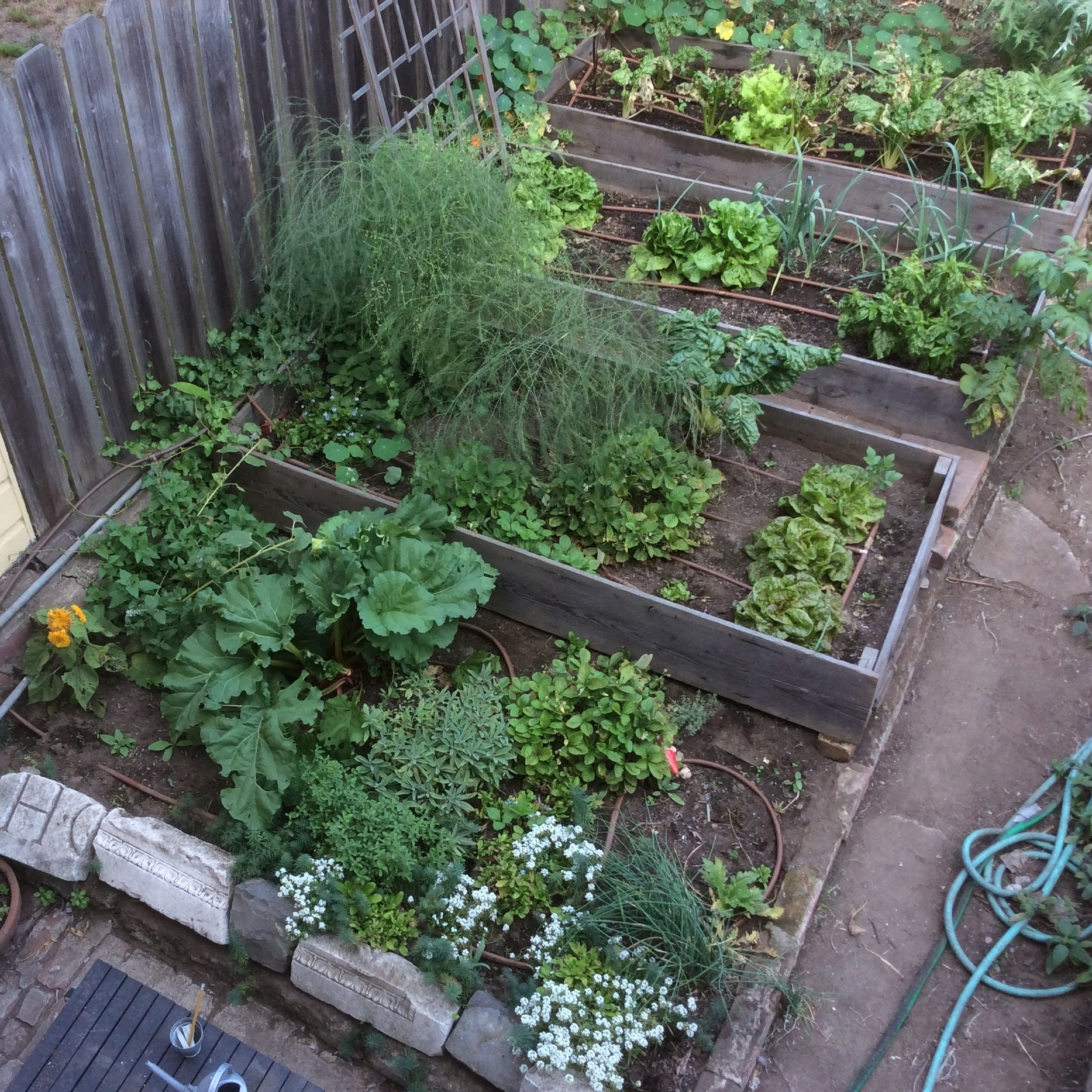 September 2015 - When the garden was looking better.