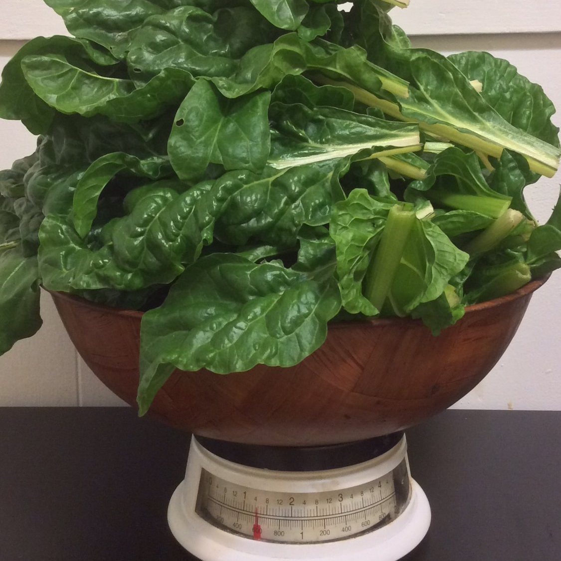 chard from the garden