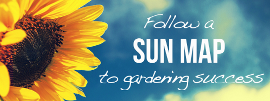 follow a sun map to success