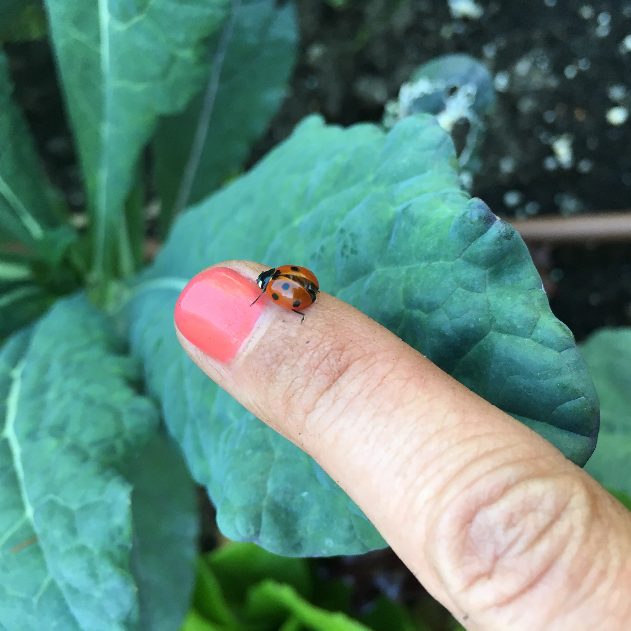 Beneficial insects like lady bugs have made a strong showing this month