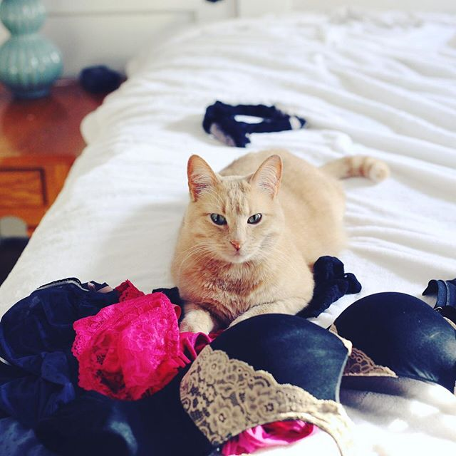 My boudoir assistant 💕 She would be much more useful with opposable thumbs but I digress...