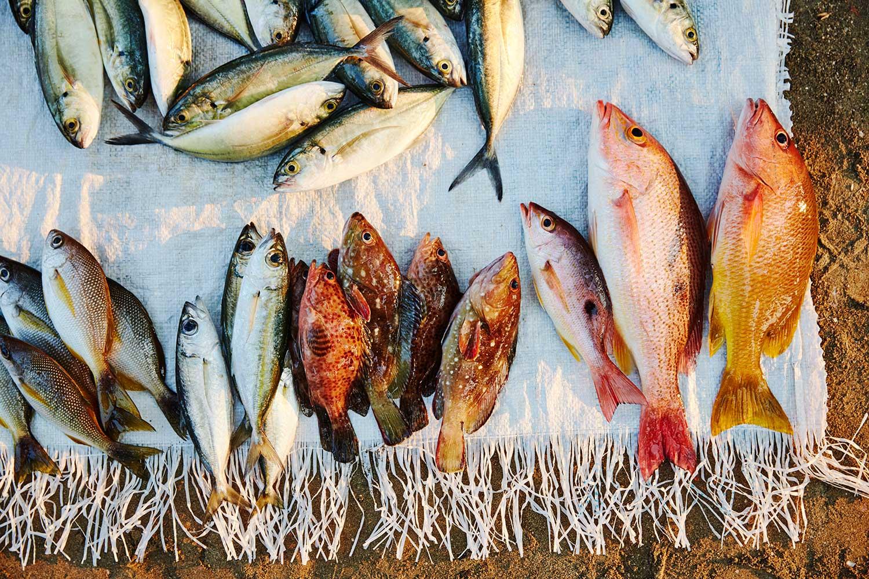 Blog-Fishing-2.jpg