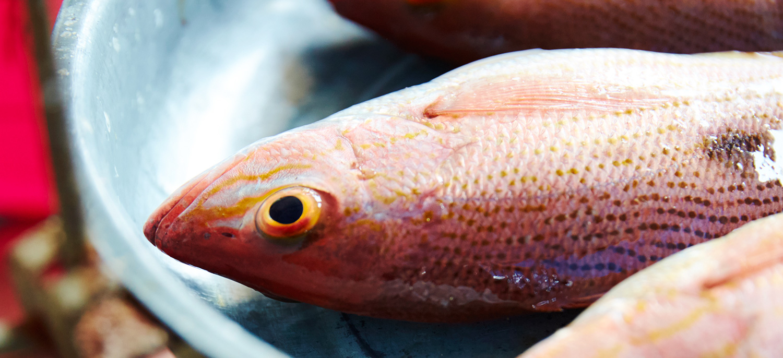 Blog-Fishing-6.jpg