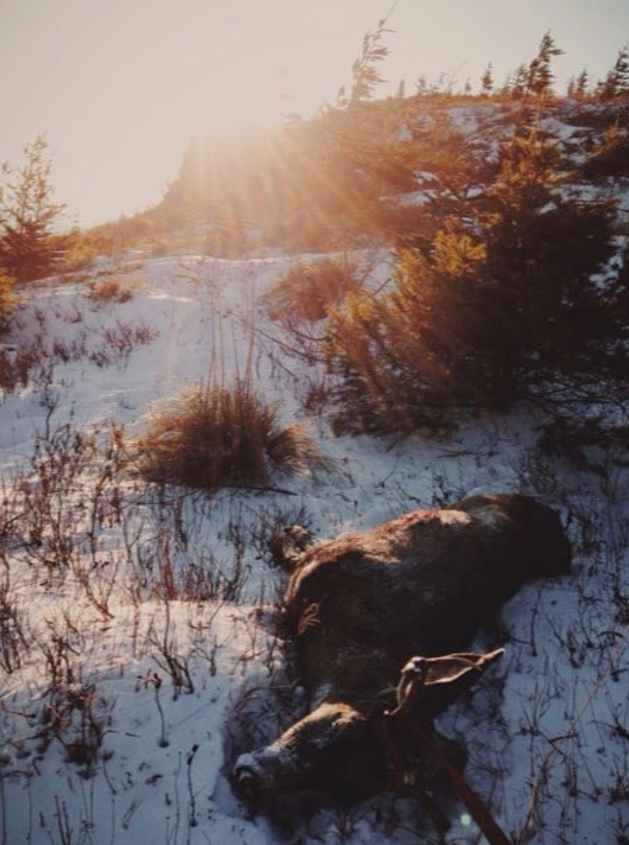 I couldn't help but stop and snap a picture of the scene while dragging out my 2014 Blacktail.