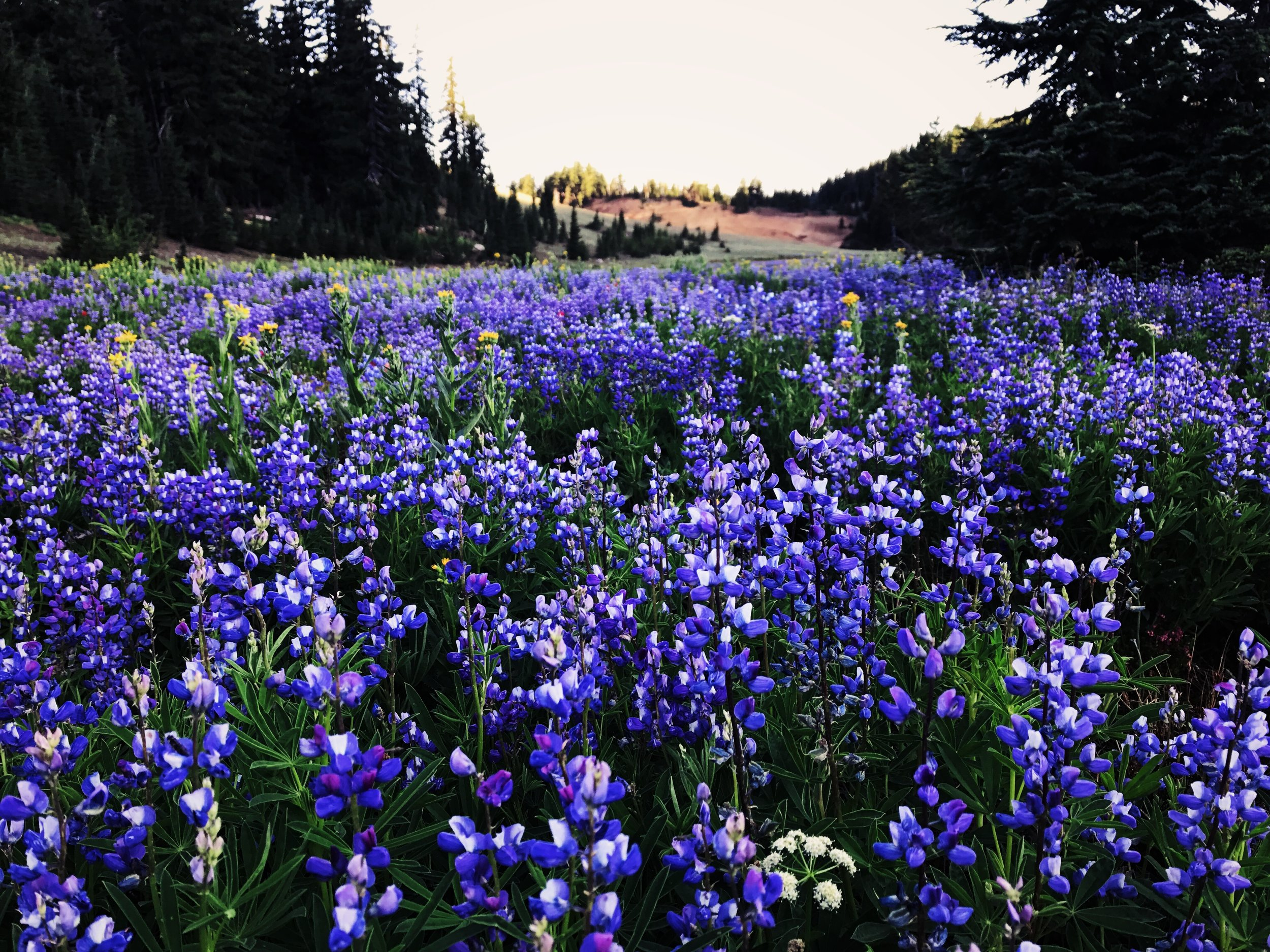 The forest has been bursting with color and the smell of flowers.