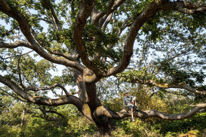 Kaj_Tree_1.jpg
