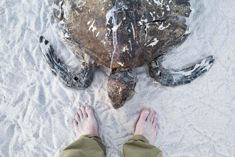 Turtle_feet_1.jpg