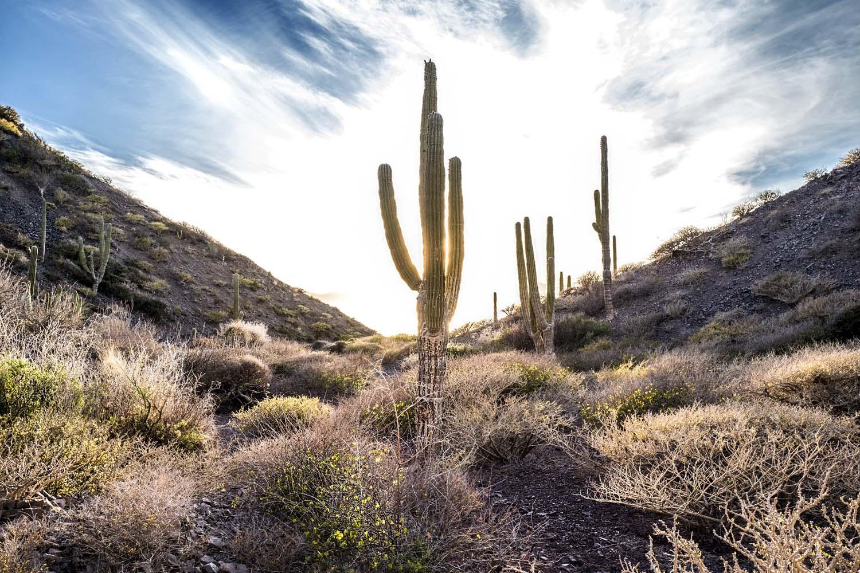 W_Carmen_CactusLight_1.jpg