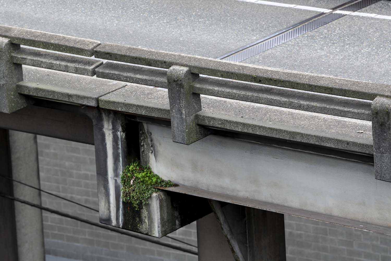 ConcreteGarden_1.jpg