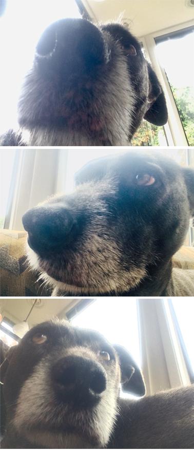 Selfies_Prudence.jpg