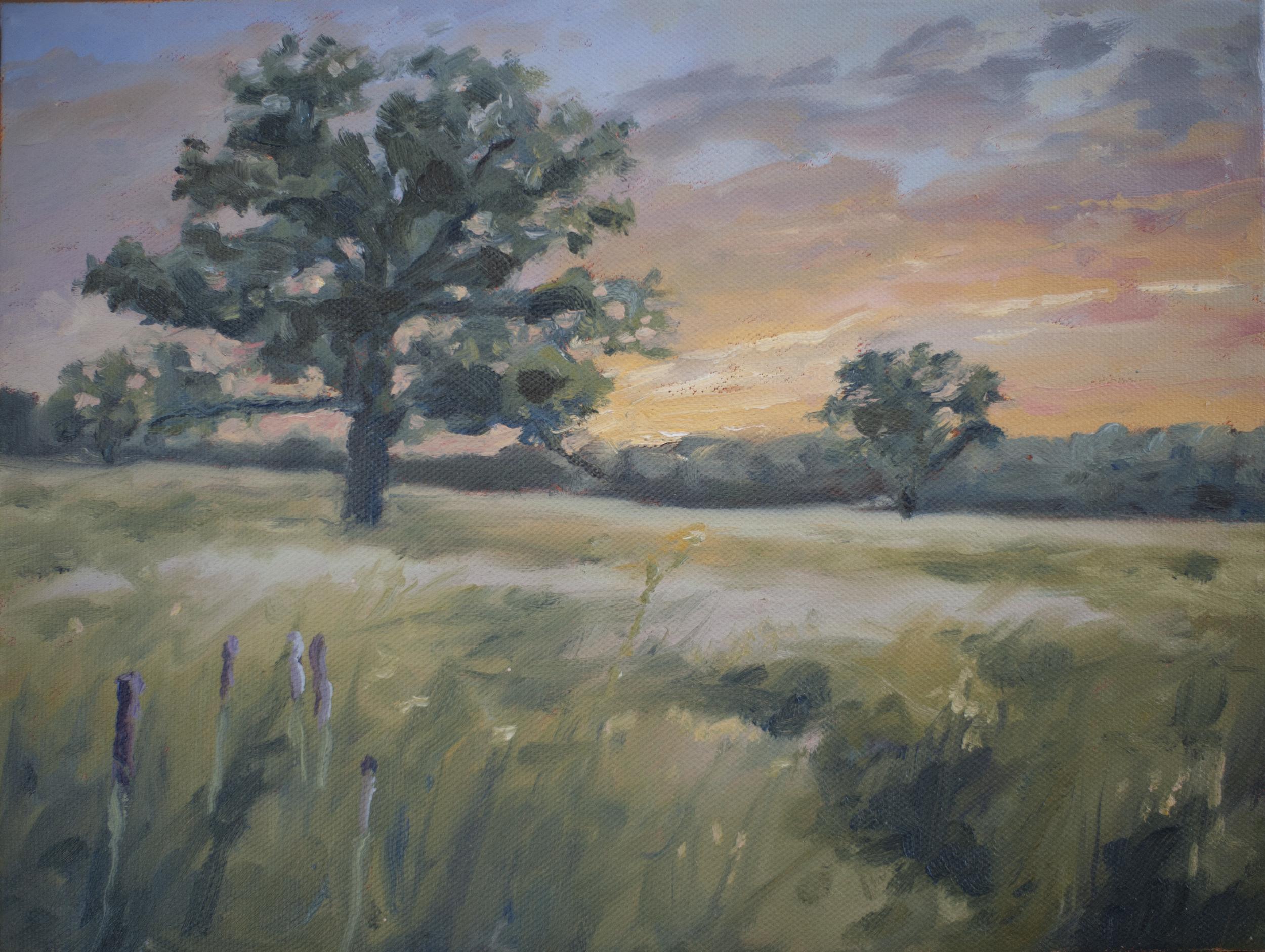 Healy Savannah study/sunset