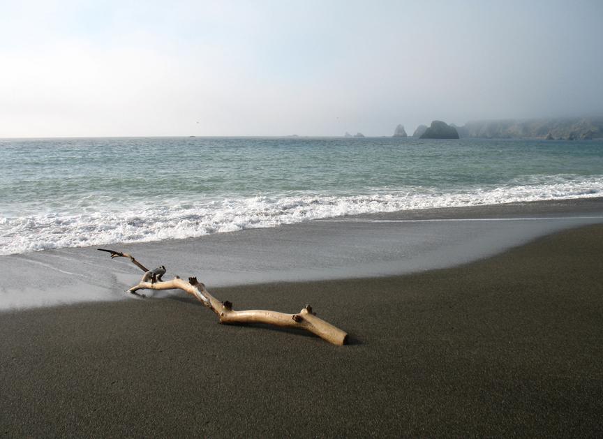 Goat_Rock_Beach_Stick.jpg
