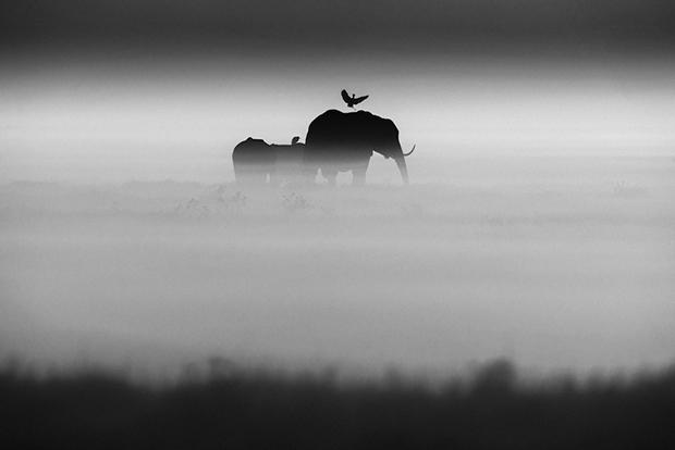 Elephants and bird- Kenya