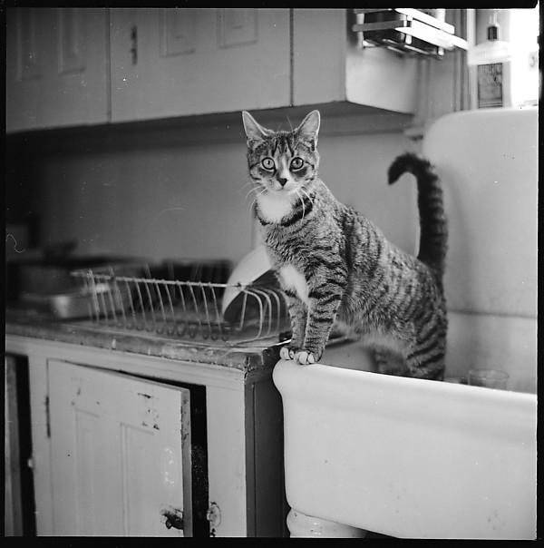 MET: 12 Portraits of a Cat, Walker Evans tra il 1940 e il 1950