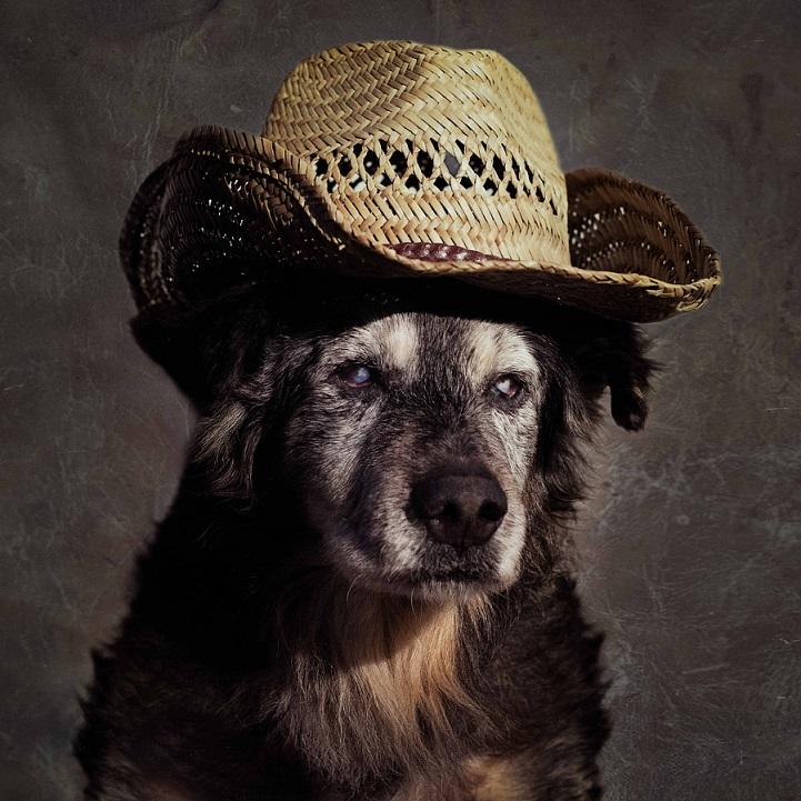 tammy-swarek-fotografie-cani-abbandonati.jpg