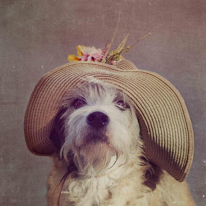tammy-swarek-fotografie-cani-abbandonati-05.jpg