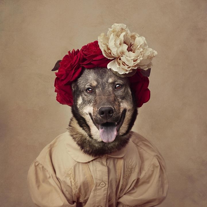 tammy-swarek-fotografie-cani-abbandonati-09.jpg