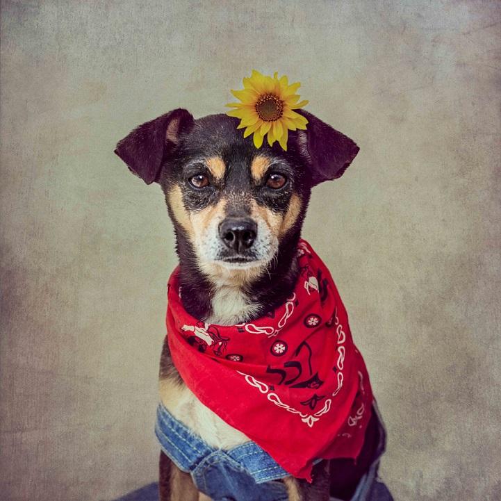 tammy-swarek-fotografie-cani-abbandonati-10.jpg