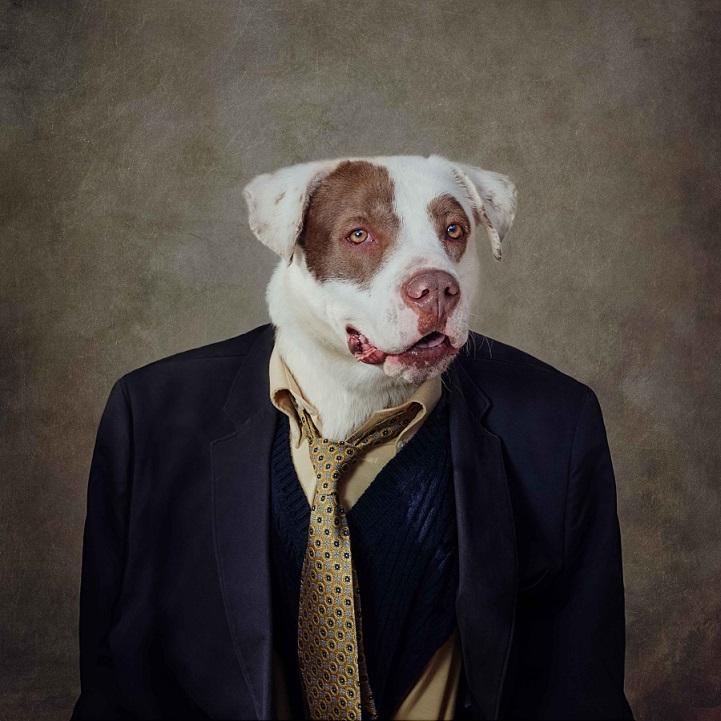 tammy-swarek-fotografie-cani-abbandonati-11.jpg