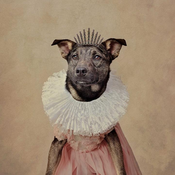 tammy-swarek-fotografie-cani-abbandonati-12.jpg