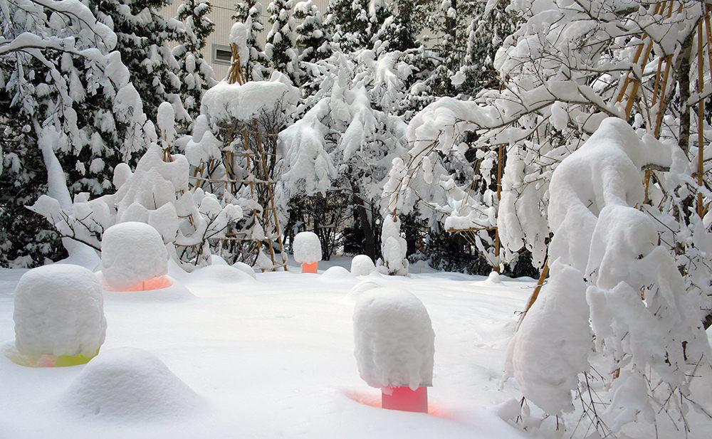 toshihiko-shibuya-snow-pallet-sapporo-01