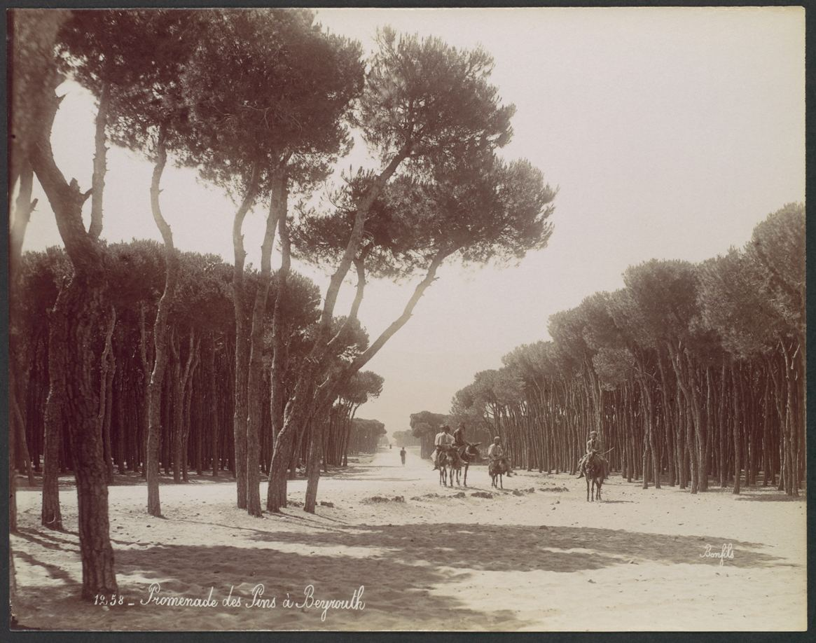 Felix Bonfils, Promenade des Pins a Beyrouth 1870