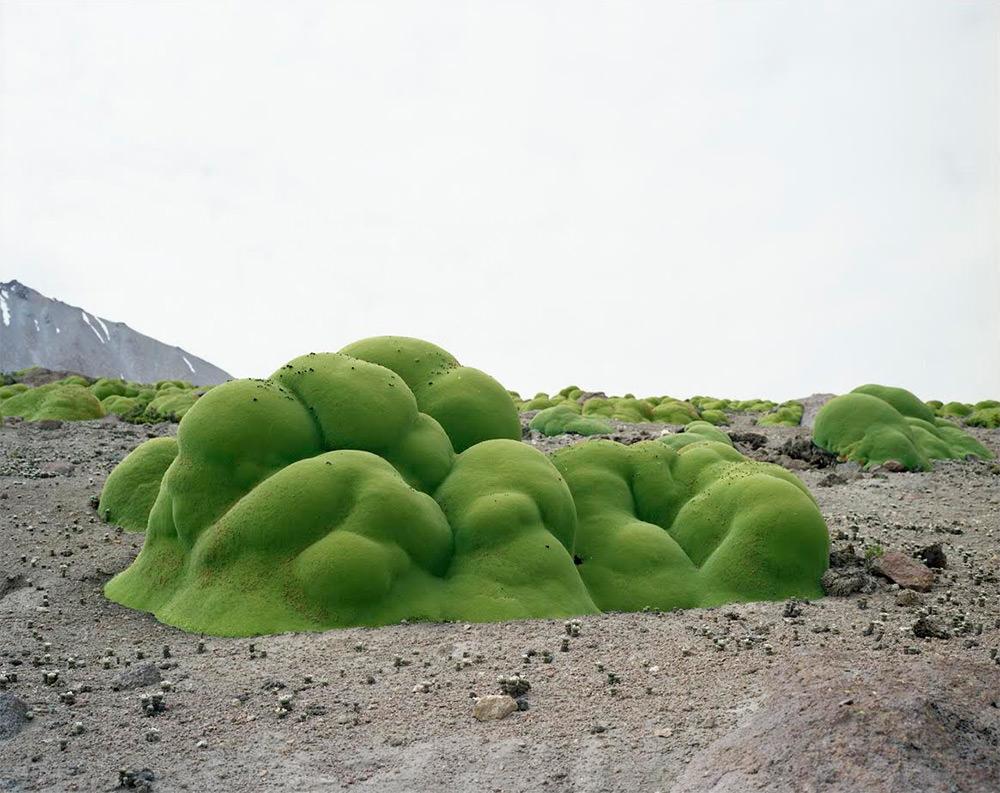 La Yareta (oltre 3000 anni; Deserto di Atacama, Cile)