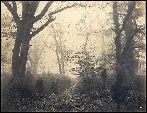 """"""" Eugene Cuvelier: Photographer in the Circle of Coro t"""", Eugene Cuvelier, """"Foresta di Fontainbleu"""", 1860"""