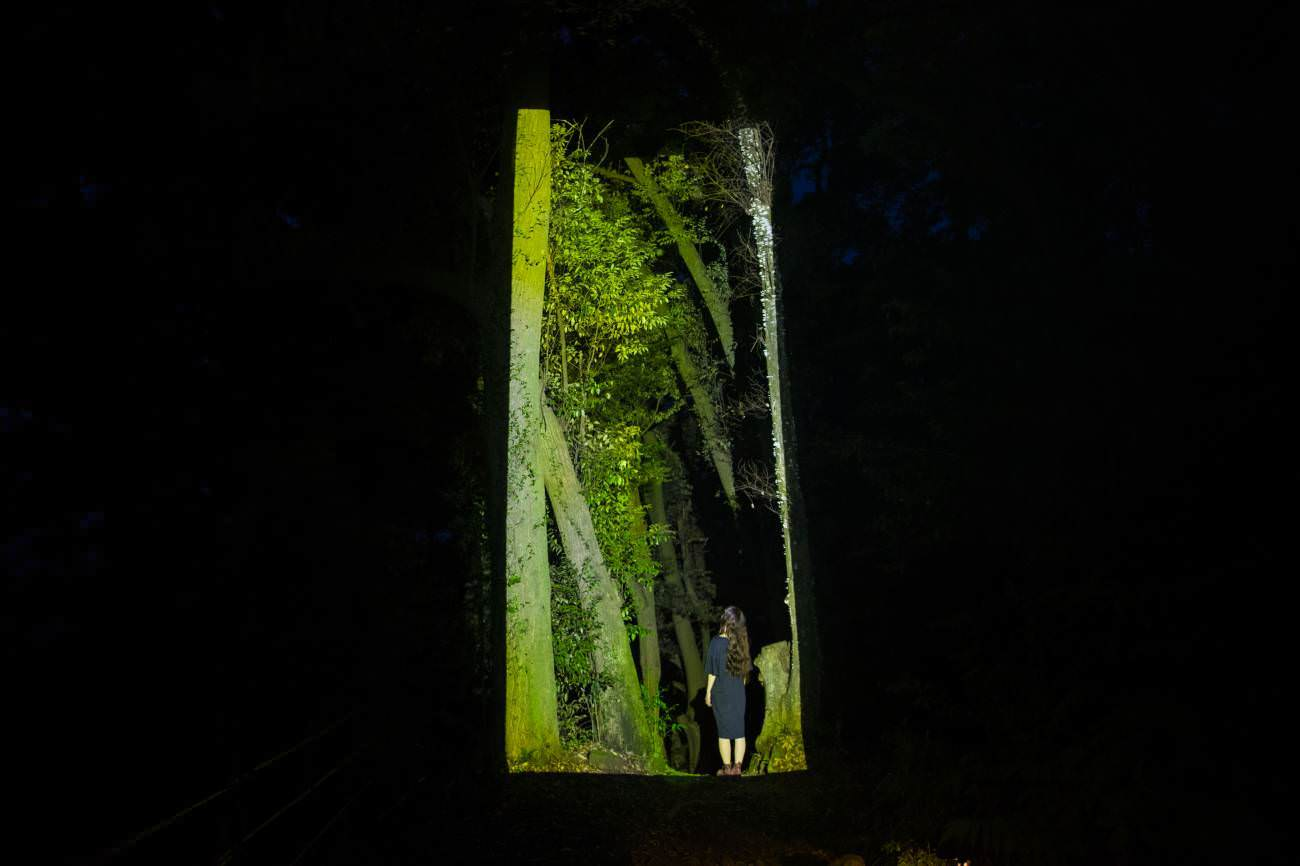 """Teamlab, """"Cut out continuous life - Forest path"""""""