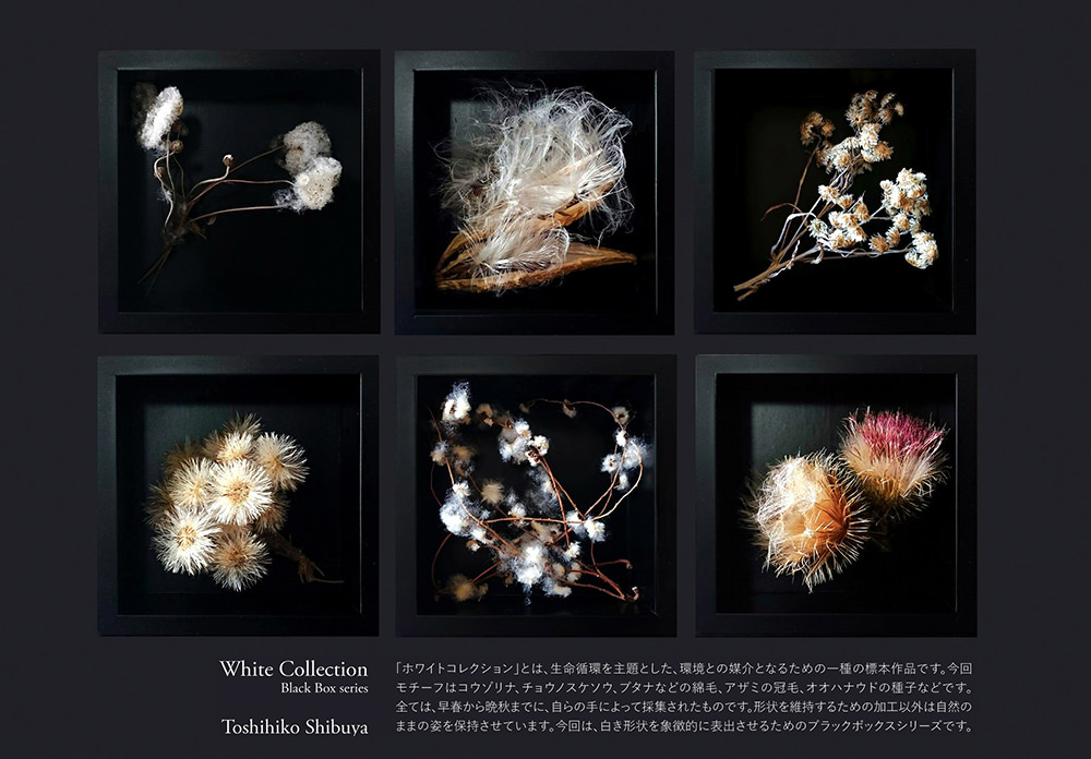 New White Collection- Black Boxes series; All photo Courtesy Toshihiko Shibuya