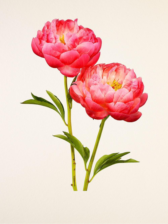 kenji-toma-beautiful-flowers-02.jpg