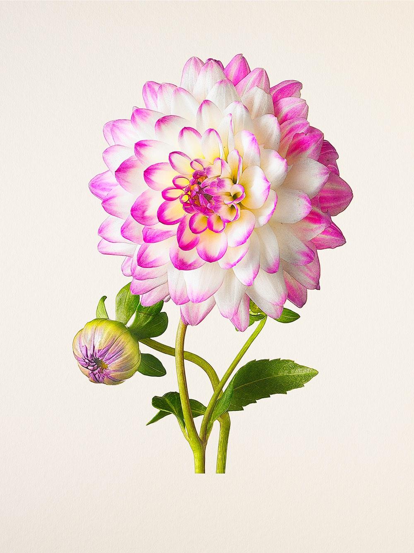kenji-toma-beautiful-flowers-01.jpg