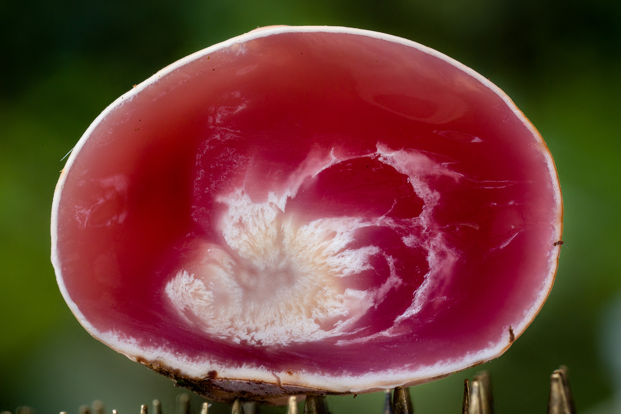fungi-9.jpg