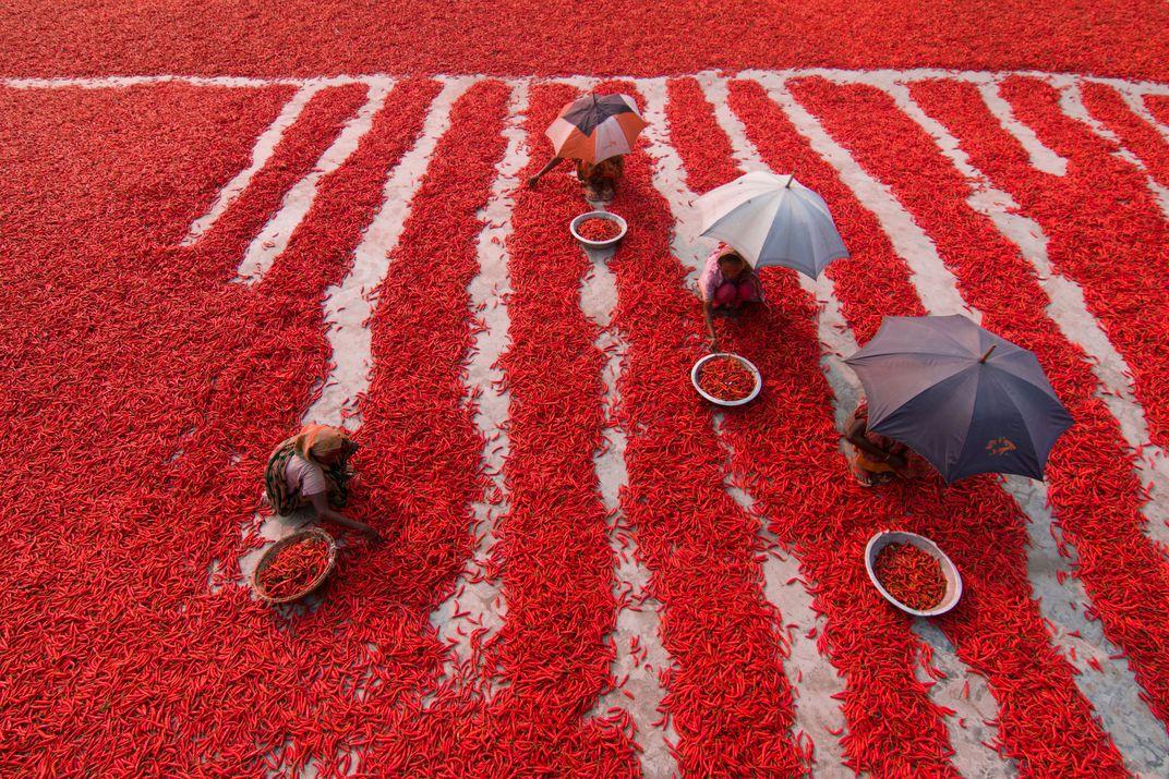 Red Chili Pepper Pickers, © Azim Khan Ronnie.  Un gruppo di lavoratori circondati dai peperoncini in Bangladesh