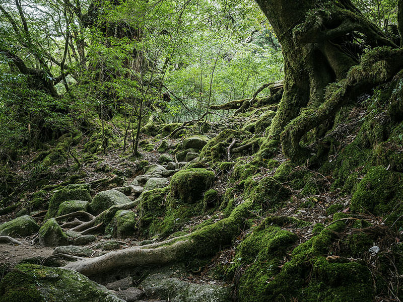 Raphael-Olivier-yakushima-the-spirit-of-forest-03
