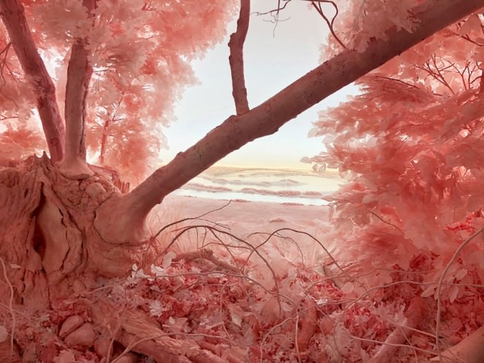 Patrick Jacobs, Pink Forest, 2018  (detail;; 335 x 457 x 320 cm). Paper, foam, clay, aluminum, styrene, epoxy, glue, polyurethane, acrylic paint, wood, lighting, fabric.
