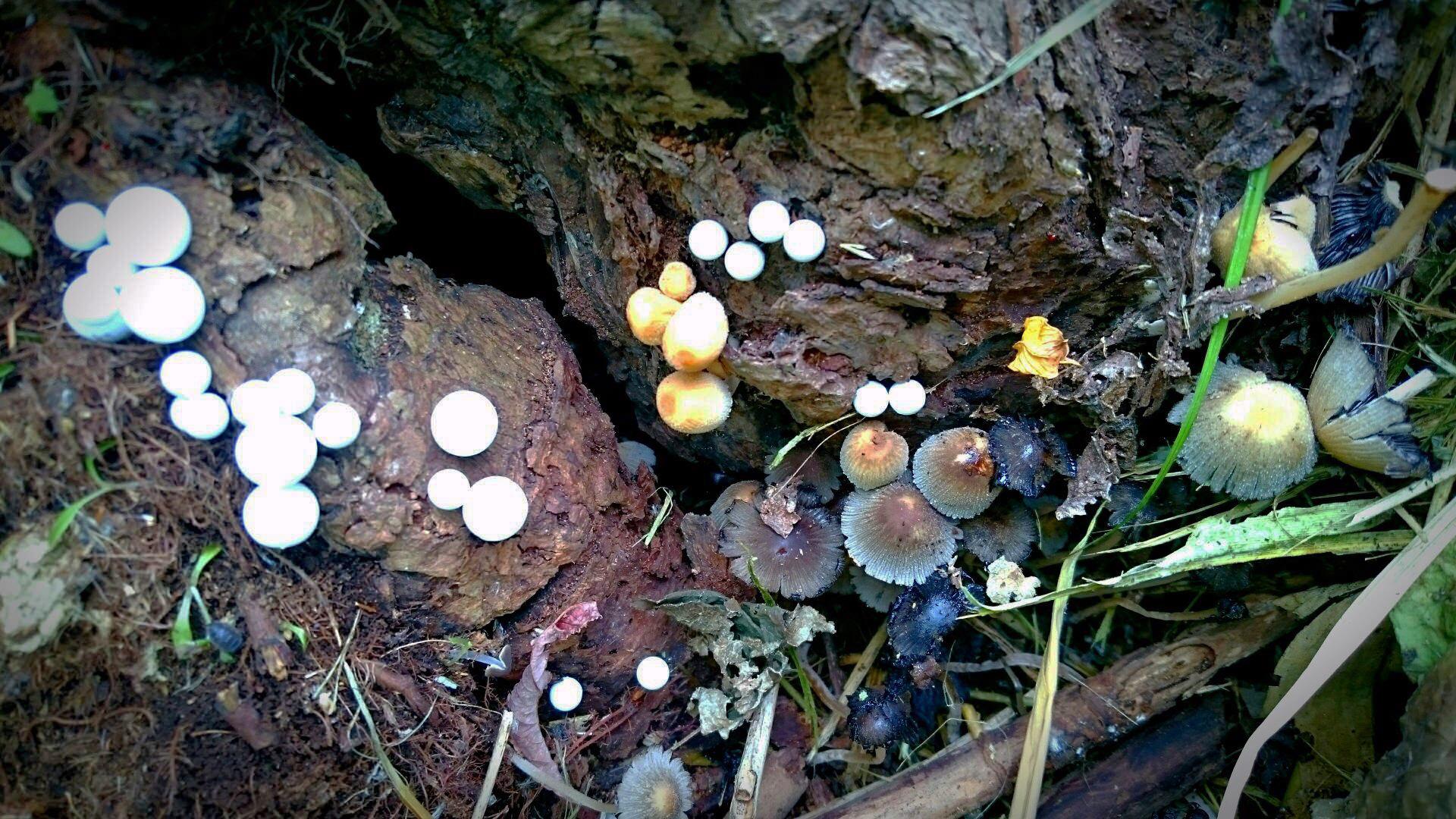 18 Blue mushroom.jpg