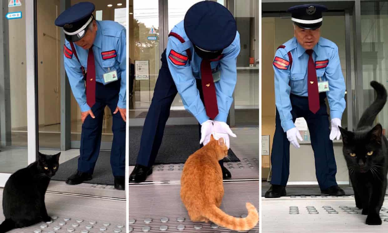 gatti-che-cercando-di-entrare-nel-museo-giapponese