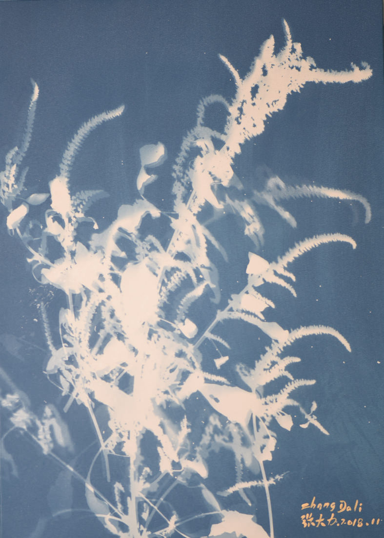 Zhang Dali, Erbe Selvatiche (70X50cm) Cyanotype on Canvas 2018