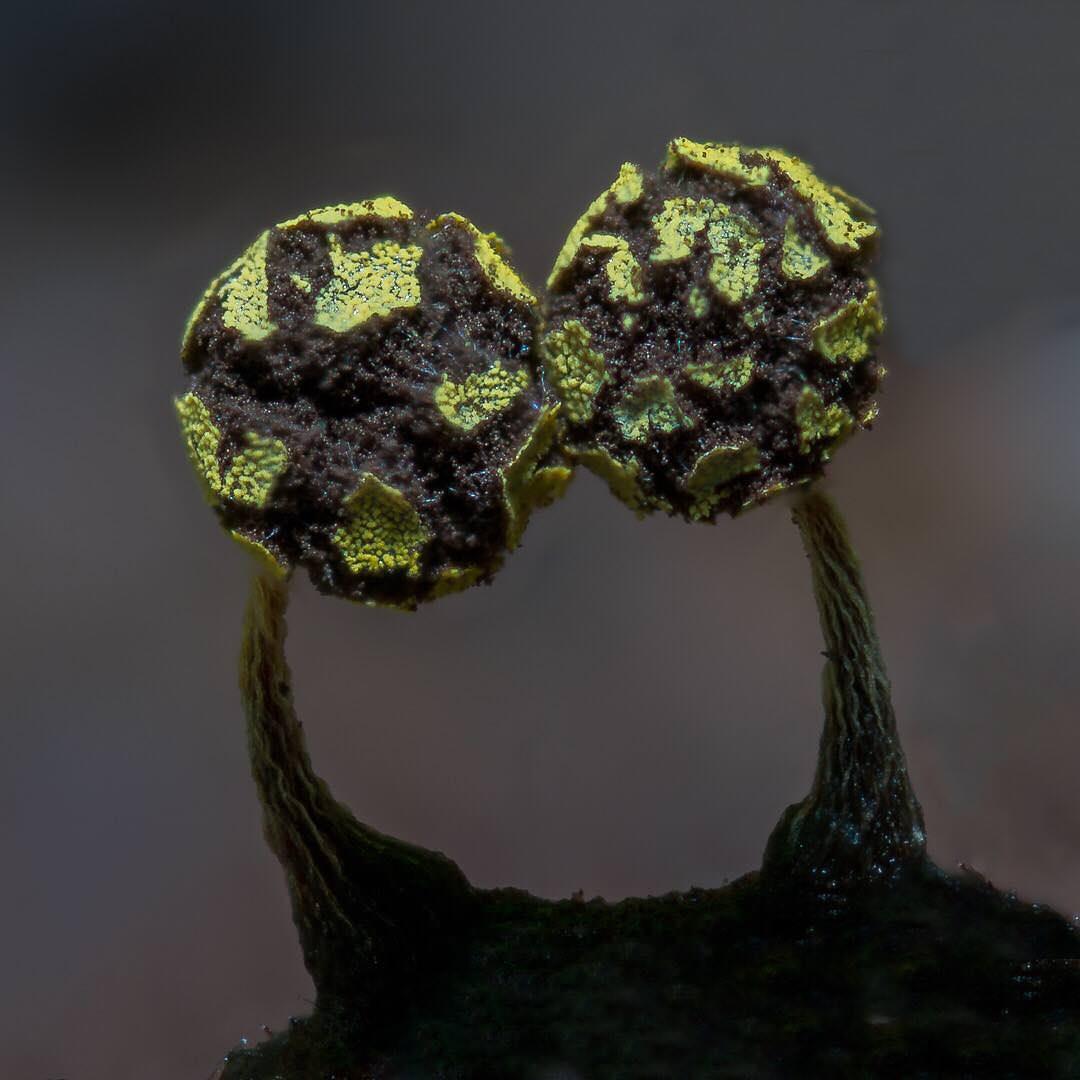 slime-mold-11.jpg