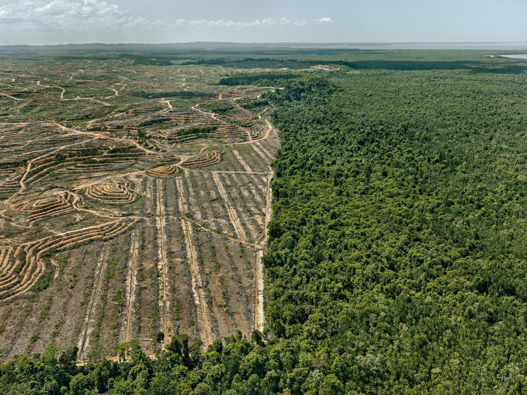 Edward Burtynsky, Clearcut #1, Palm Oil Plantation, Borneo, Malaysia 2016. photo © Edward Burtynsky, courtesy Admira Photography, Milan / Nicholas Metivier Gallery, Toronto