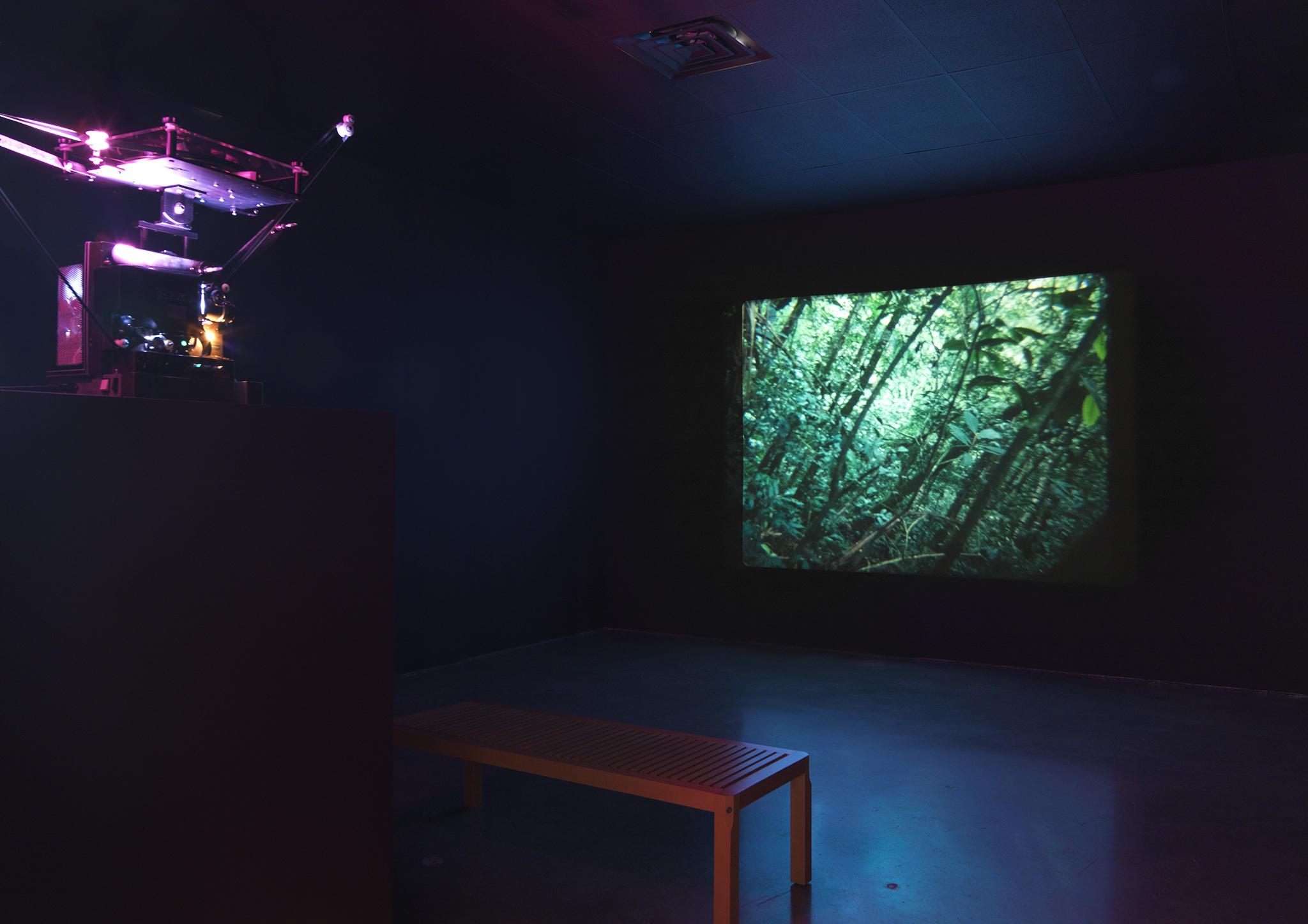 Daniel Steegmann Mangrané, Spiral Forest (Kingdom of all the animals and all the beasts in my name) 2013-15. Film 16mm, colore, silenzioso; 11 min 4 sec. Veduta dell'installazione: CCS Bard Hessel Museum, 2018. Courtesy dell'artista. Foto: Matt Grub